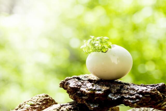 卵から若葉